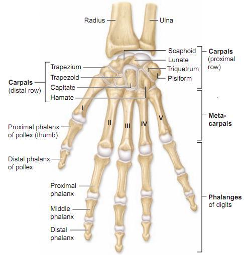 wrist_hand
