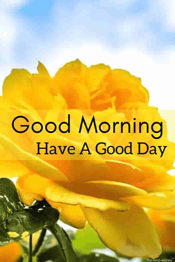 good morning wishes with yellow rose
