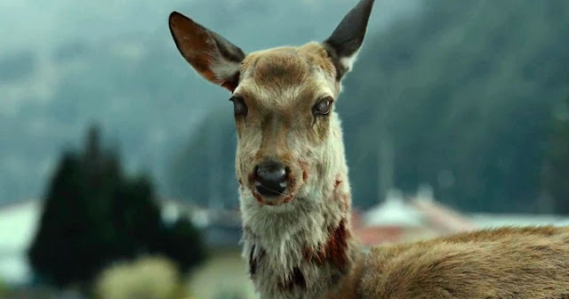 zombie deer, chronic wasting disease