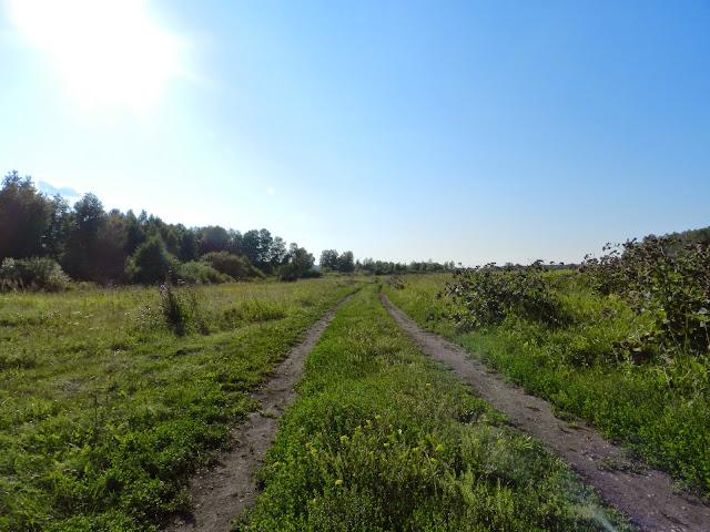 Полевая дорога к Бухаринскому плёсу