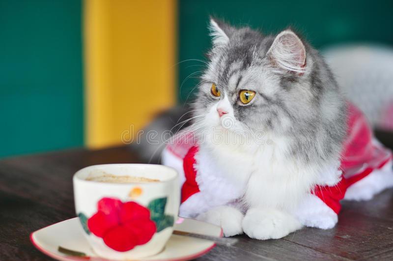 Cat Diarrhea Baby Food