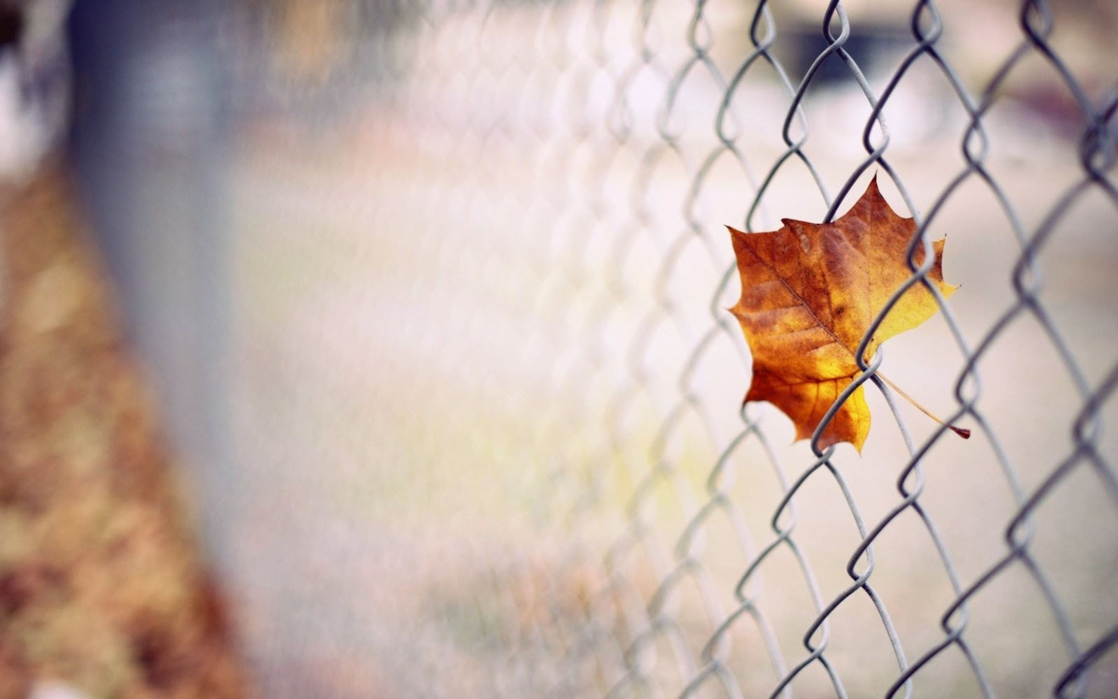 Free Desktop Wallpaper Fall Foliage صور خلفيات أوراق الشجر جميلة عالية الدقة مداد الجليد