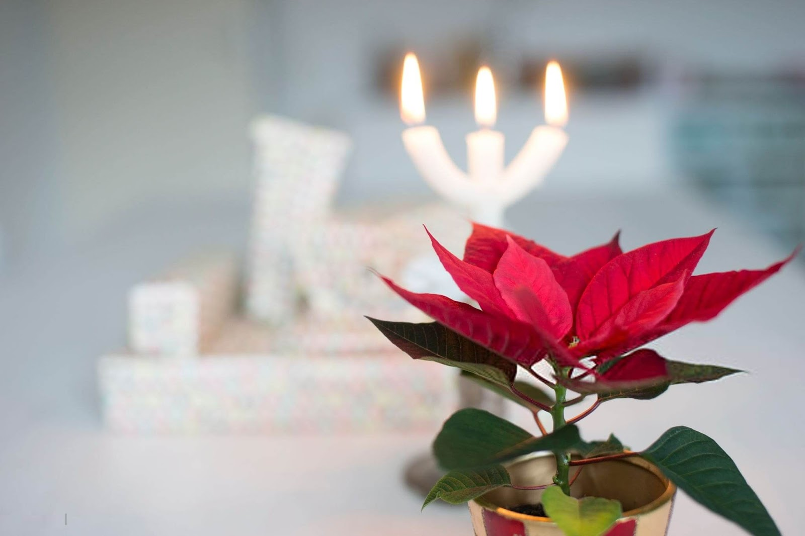 Pictures of Christmas Flowers