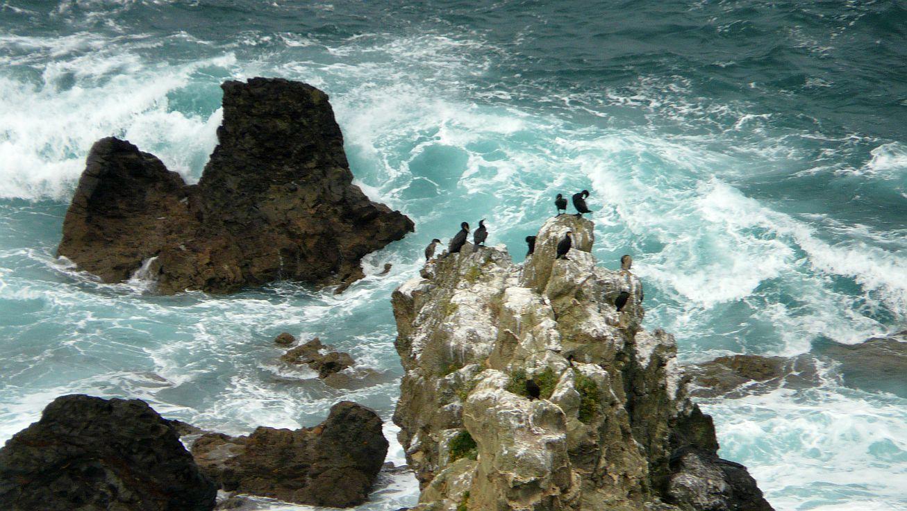 cormoran monudo menakoz 01
