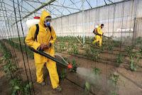 Homens aplicando agrotóxicos - Alimentos Orgânicos