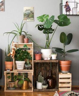 Las plantaLas plantas de interior ayudan a recuperarse de algunas dolencias psicológicas
