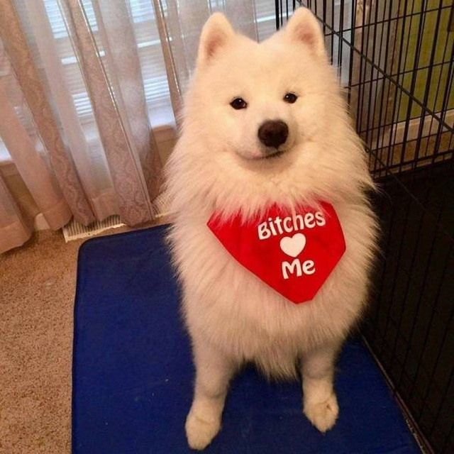 Cute dogs - part 251, dog picture, adorable dogs