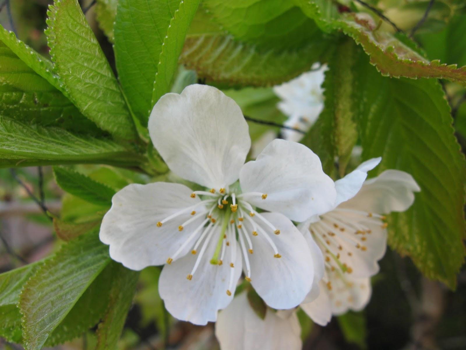 Uit het leven van alledag: lente in aantocht