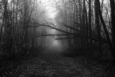 Ein Schwarz/Weiß Foto. Ein umgestürzter Baum ragt in den Bahndamm.