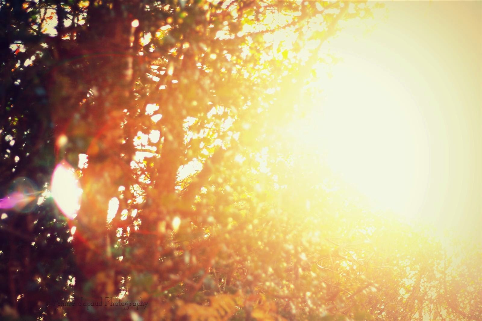 blinding golden sunflare