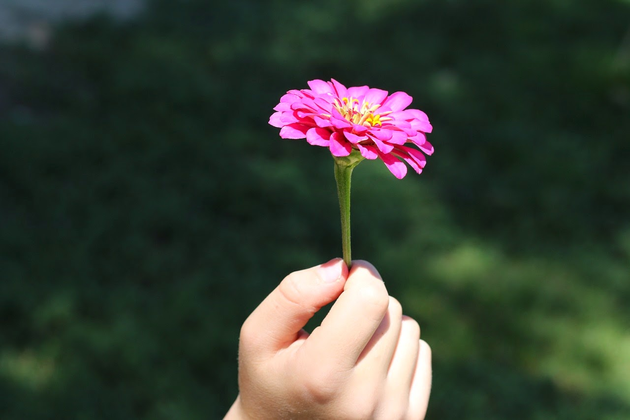 Grandchild Holding A Flower, Living From Glory To Glory Blog