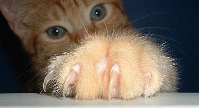 kuku kucing yang tajam