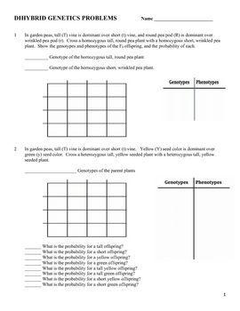 dihybrid cross worksheet. Black Bedroom Furniture Sets. Home Design Ideas