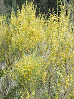 couleur jaune, malooka