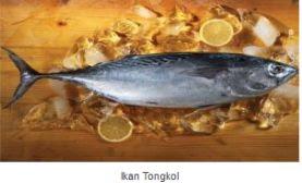 Jenis Ikan Air Laut Yang Bisa Dikonsumsi