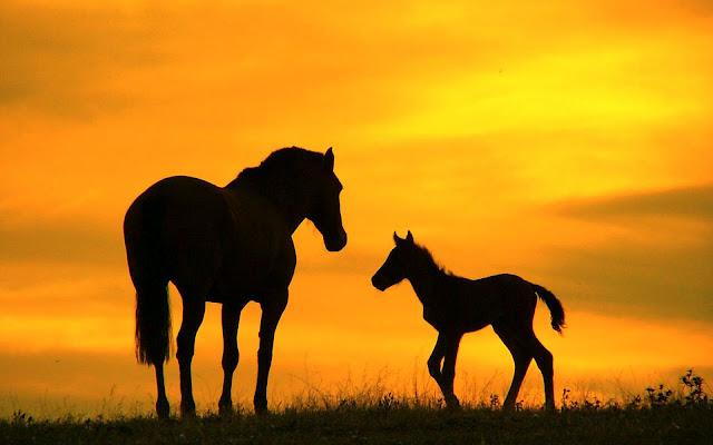 De silhouetten van een groot en klein paard en een oranje lucht
