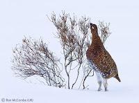 Wildlife Photographer of the Year neve