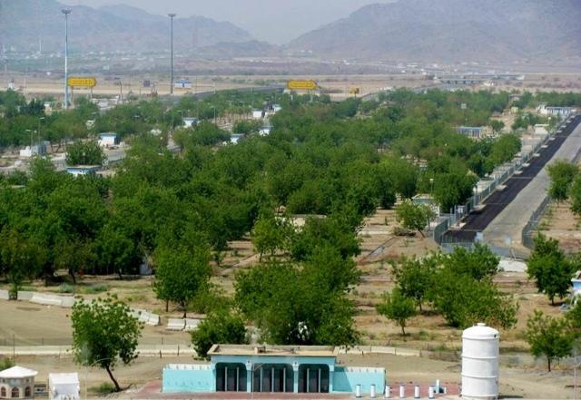 kisah pohon soekarno di padang arafah