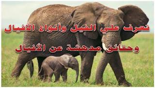 تعرف علي الفيل وأنواع الأفيال وحقائق مدهشة عن الأفيال