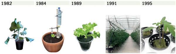 Tren sistem budidaya hidroponik dari tahun ke tahun