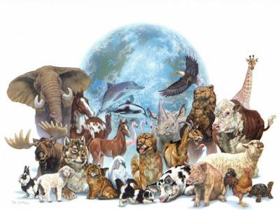 Dari potensi keanekaragaman hayati binatang sanggup dimanfaatkan sebagai sumber protein hewani Materi Sekolah    Manfaat Keanekaragaman Hayati