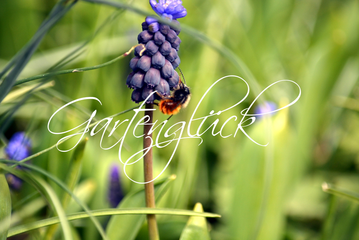 Gartenglueck, Gartenblog