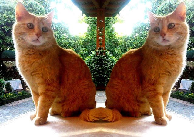 gato doble