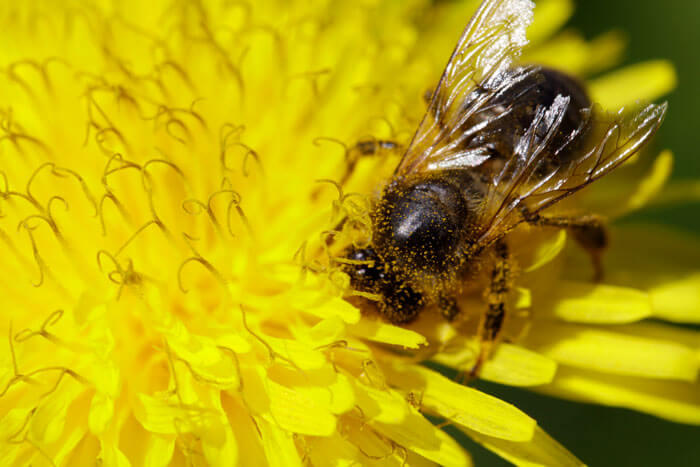Bees Were Declared To Be The Most Important Beings On The Planet