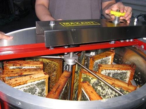 Μελιτοεξαγωγείς στις χαμηλότερες τιμές