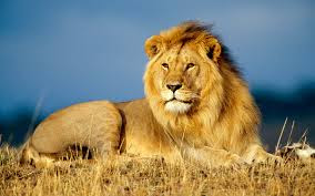 Animal Wallpaper Hd Free Wildlife Wallpapers Wild Animals Wallpapers Download For Free