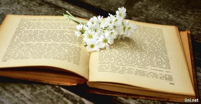 ảnh hoa trắng bên trang sách cũ đẹp