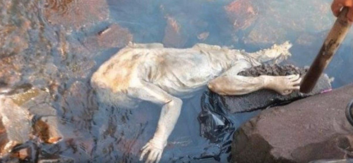 Bigfoot Evidence Strange Creature Found Dead In River By Fireman