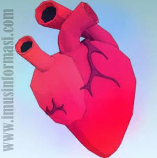 Cara Merawat Dan Menjaga Kesehatan Jantung Dengan Baik