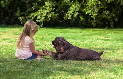 A young girl sits on the lawn and shakes hands with a dog