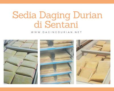 Daging Durian Medan Terenak di Sentani