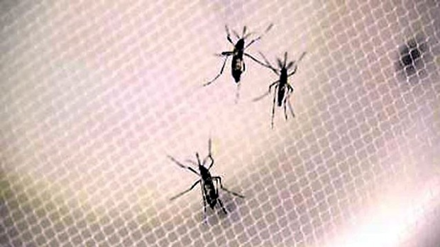 The EU ambassadors warn that Venezuela can not fight Zika