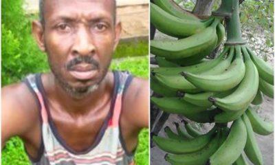 Farmer arrested for killing plantain thief in Edo State