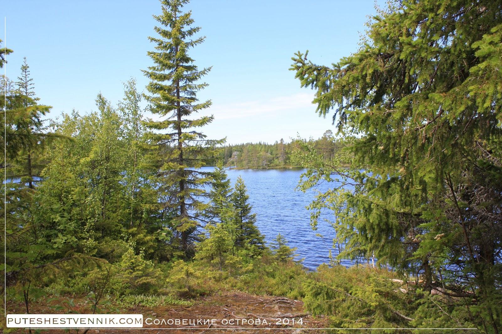 Лесное озеро на Соловках