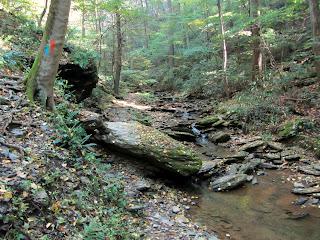Blue blaze along Kelly's Run Trail