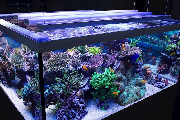 Lighting In Aquarium Pondquip