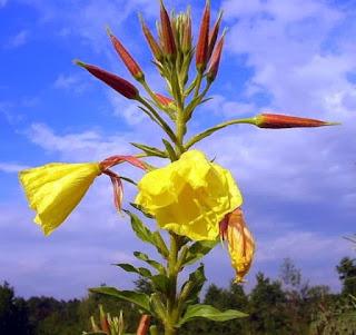 Jenis Bunga Langka yang Selalu Mengeluarkan Wangi Aneh