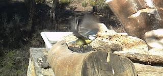 """Birding Sobrarbe """"ruta ornitológica de Casa Gerbe"""""""