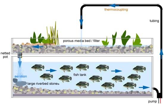 Kelebihan dan kekurangan budidaya pertanian dengan aquaponik