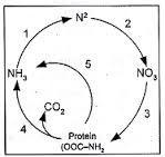 soal biologi tentang daur nitrogen