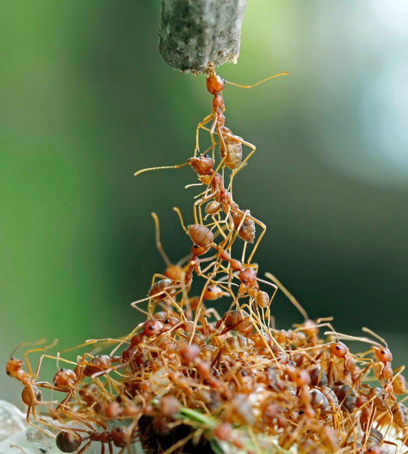 O Livro Da Natureza: Formigas