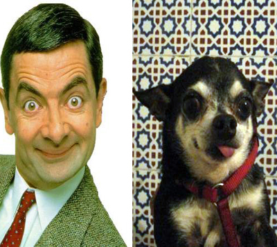 animals humans animal funny dogs dog peoples alike nice owners alikes did quotes act