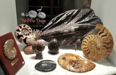 Fossilized shells, Ammonite on display at Tun Jugah