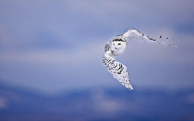 hd vogel wallpaper met - photo #22