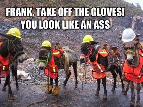 Funny Donkey Meme - Frank, take off the gloves! You look like an ass!