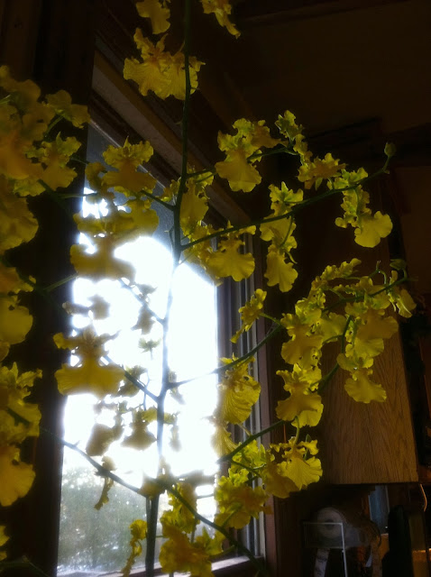 The-Yellow-Orchid-at-The-Coffee-Exchange-in-Providence-Rhode-Island